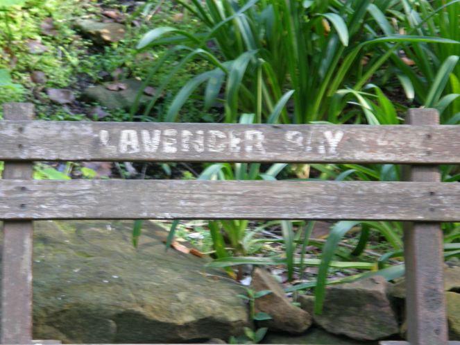 lavender bay